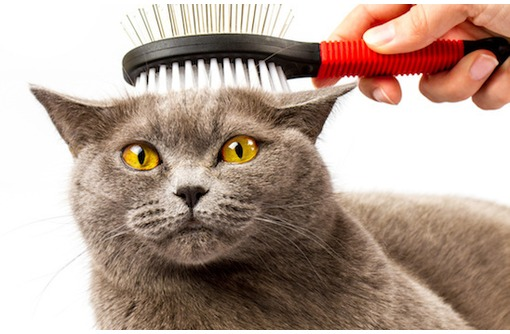 Профессиональная стрижка кошек и собак, фото — «Реклама Севастополя»