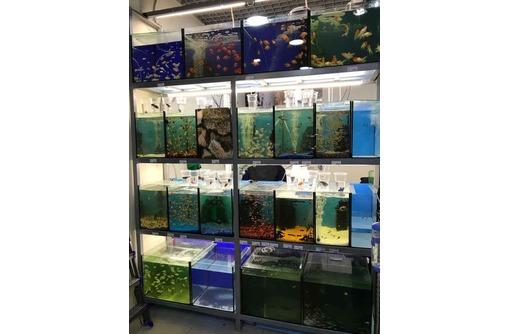обслуживание аквариумов, ремонт и изготовление, фото — «Реклама Севастополя»