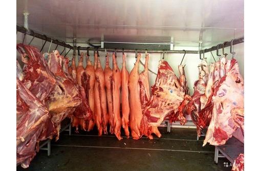 Холодильное оборудование для охлаждения мяса., фото — «Реклама Красногвардейского»