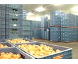 Хранение овощей, фруктов в холодильных камерах.Оборудование с установкой., фото — «Реклама Симферополя»