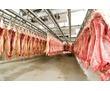 Холодильные Камеры Заморозки и Хранения Мяса., фото — «Реклама Севастополя»