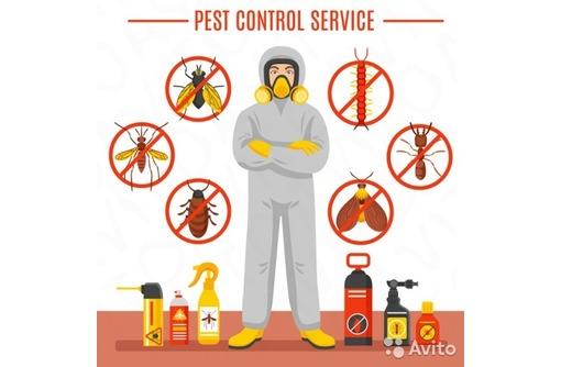 Заказать услуги дезинфекции от тараканов в Севастополе, фото — «Реклама Севастополя»