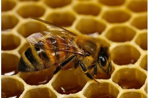 Пчеломатки Карпатка Карника Май 600 Июнь 400, фото — «Реклама Севастополя»