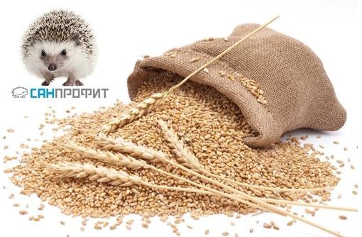 Аэрозольно-газовая обработка зерна, фото — «Реклама Севастополя»