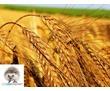 Борьба с вредителями хлебных запасов, фото — «Реклама Джанкоя»