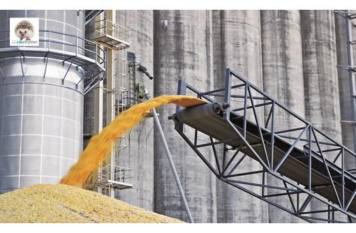 Обеззараживание зерна и продуктов переработки, фото — «Реклама Красногвардейского»