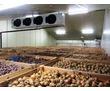 Холодильная камера для хранения овощей (овощехранилище)., фото — «Реклама Красногвардейского»