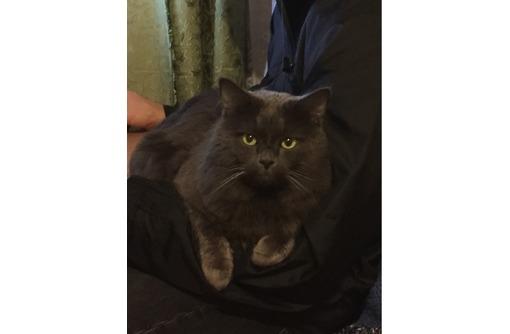 Вязка с гениальным котом(Русская Голубая), фото — «Реклама Севастополя»