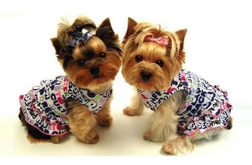 Профессиональный груминг, стрижка собак и кошек, фото — «Реклама Севастополя»