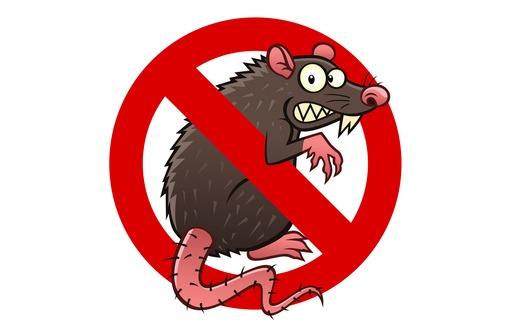 Ужас, у Вас завелись мыши или крысы! Звоните нам, мы их уничтожим!, фото — «Реклама Симферополя»