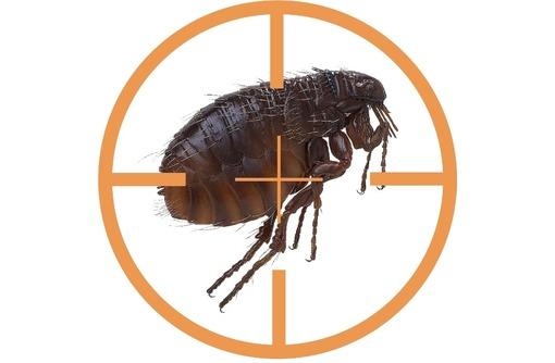 Уничтожение тараканов , клопов, комаров, клещей и других насекомых!Истребление грызунов!Эффект 100%!, фото — «Реклама Алушты»