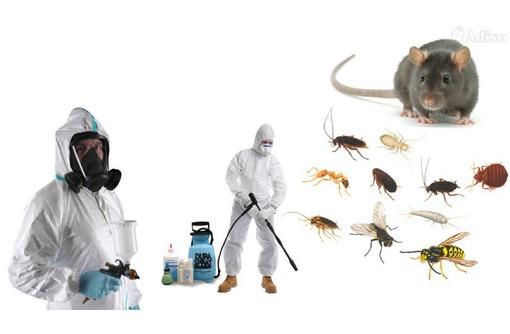 Уничтожение тараканов, комаров, клещей и других насекомых и грызунов! Эффективно 100%!, фото — «Реклама Джанкоя»