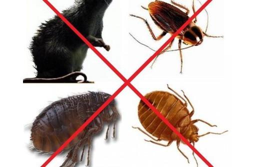 Обработка от комаров, клещей, тараканов, клопов и других насекомых и грызунов! Эффект 100%!, фото — «Реклама Партенита»
