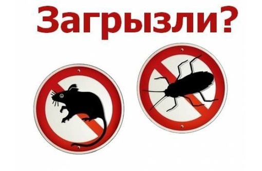 Истребление любых популяций насекомых! Уничтожение крыс и мышей! Эффект 100%! Гарантии! Звоните!, фото — «Реклама Старого Крыма»