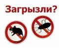 Истребление любых популяций насекомых! Уничтожение крыс и мышей! Эффект 100%! Гарантии! Звоните! - Клининговые услуги в Старом Крыму