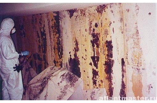 Вы устали от грибка или плесени на стенах??? Звоните нам, уберем за 30 минут! Эффект 100%!, фото — «Реклама Севастополя»