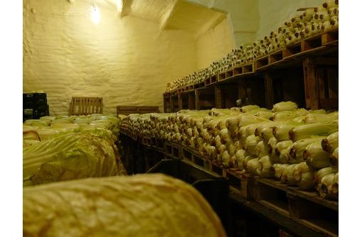 Холодильная камера хранения для капусты. Овощехраниниле. Оборудование Bitzer, Bock для овощей, фото — «Реклама Красногвардейского»