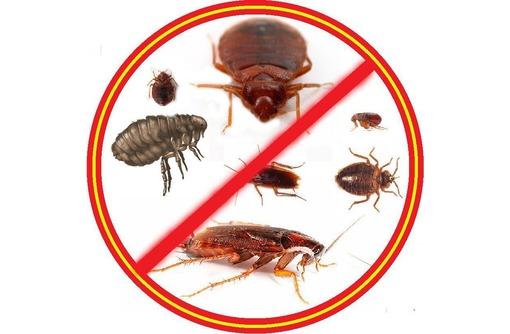 Истребление насекомых, грызунов и плесени! Антимикробная обработка! Эффект 100%! Жмите!, фото — «Реклама Симферополя»