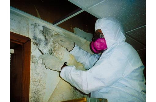 Борьба с плесневыми грибами в Севастополе  оперативная помощь в уничтожении вредителей! Эффект 100%, фото — «Реклама Севастополя»