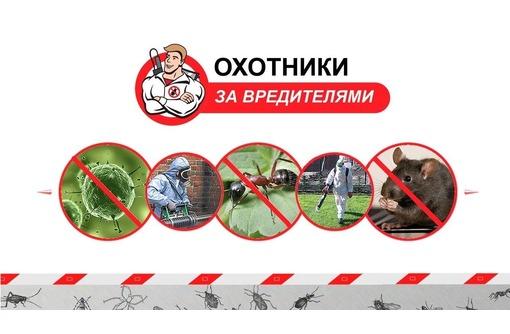 Уничтожение всех насекомых за раз! Истребление грызунов! Борьба с плесенью! Результат гарантируем!, фото — «Реклама Севастополя»