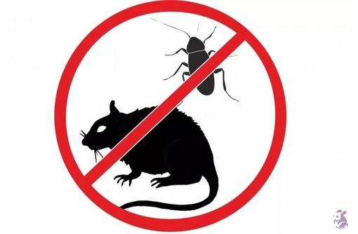Истребление любых популяций насекомых и грызунов за 1 раз! Эффект 100%! Гарантии! Жмите!, фото — «Реклама Севастополя»