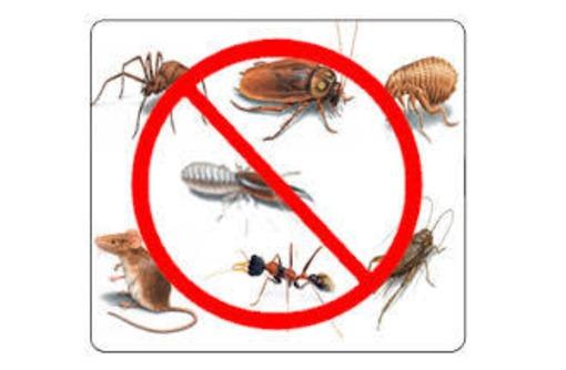 Профессиональное уничтожение грызунов,уничтожение насекомых,акарицидная обработка (клещ),сколопендры, фото — «Реклама Севастополя»