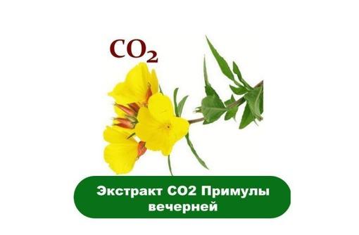 Купить СО2 примулы вечерней, фото — «Реклама Алупки»