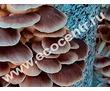 Мицелий вешенки, шампиньонов, шиитаке, грибные блоки. Доставка по России., фото — «Реклама Севастополя»
