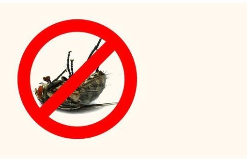 Обработка квартир от мух и их личинок! Эффект 100 %! Безопасно для людей и животных! Звоните!, фото — «Реклама Севастополя»