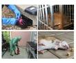 Борьба с полевками, серыми крысами и домовыми мышами в строениях и участках! Европейские стандарты!, фото — «Реклама Алушты»