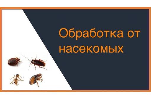 Дезинсекция ( уничтожение насекомых в помещениях и на дворовой территории). Безопасно для здоровья!, фото — «Реклама Алушты»