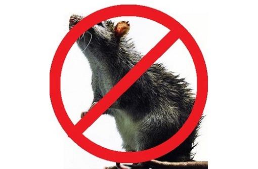 На Вашем участке завелись крысы или полевки? Или Вас беспокоит домовая мышь? Звоните нам!Эффект 100%, фото — «Реклама Бахчисарая»