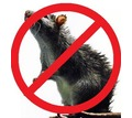 Уничтожение грызунов и насекомых! Дератизация и дезинфекция! Предоставление всех документов! - Клининговые услуги в Крыму