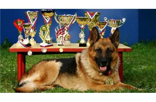 Дрессировка собак, стрижка собак и кошек, фото — «Реклама Севастополя»