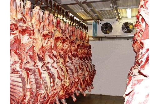 Холодильное оборудование для мяса.Заморозка,охлаждение., фото — «Реклама Судака»