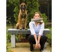 Дрессировка собак, стрижка собак и кошек - Дрессировка, передержка в Севастополе