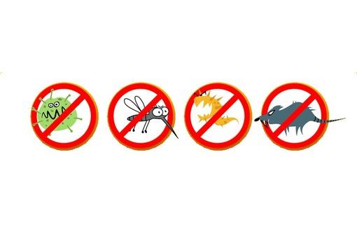 Полное уничтожение насекомых, грызунов и вредных микроорганизмов! Полный пакет документов! Гарантия!, фото — «Реклама Бахчисарая»