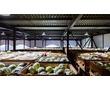 Холодильные Установки для Склада Овощехранилища с монтажем., фото — «Реклама Джанкоя»