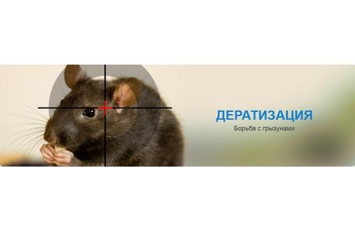 Профилактическая обработка и полное истребление грызунов! Полный пакет документов! Гарантия!, фото — «Реклама Гурзуфа»