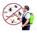 Уничтожение насекомых и грызунов в Евпатории! Дезинфекция, Дезинсекция, Дератизация!Вся документация - Клининговые услуги в Евпатории
