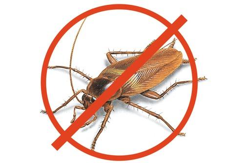 Полное уничтожение с 1 раза всех насекомых сразу в Черноморском районе! Дератизация! Гарантия!, фото — «Реклама Черноморского»