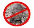 Дератизация ( истребление грызунов) в Черноморском районе и по всему Крыму! Пакет документов!, фото — «Реклама Черноморского»