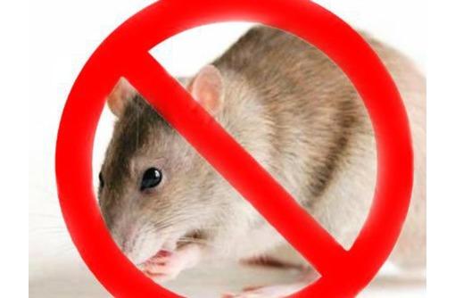 Полное истребление грызунов всех видов! Сертифицированные средства! Безопасны для здоровья! Жмите!, фото — «Реклама Алупки»