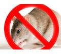 Полное истребление грызунов всех видов! Сертифицированные средства! Безопасны для здоровья! Жмите! - Клининговые услуги в Крыму