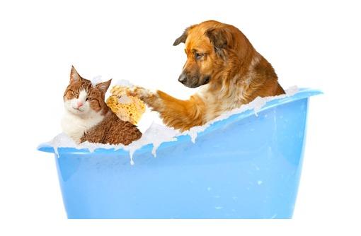 Стрижка для кошек и собак., фото — «Реклама Севастополя»