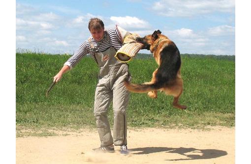 Дрессировка собак всех пород, фото — «Реклама Севастополя»