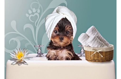 Профессиональная стрижка собак и кошек, фото — «Реклама Севастополя»
