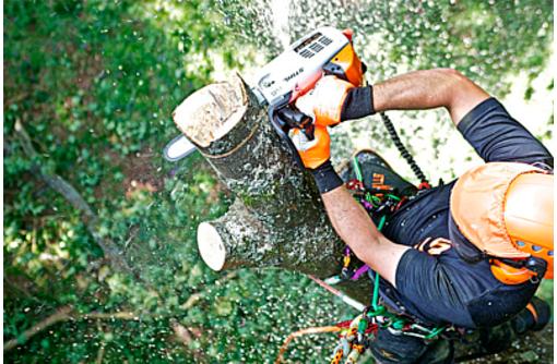 Профессиональное удаление аварийных деревьев любой сложности, фото — «Реклама Симферополя»