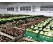 Агрегат холодильный для овощехранилища, фото — «Реклама Белогорска»