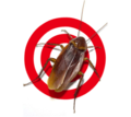 Thumb_big_pest_control_and_exterminator_services_in